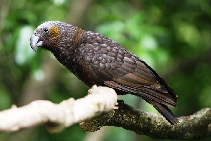 Hike New Zealand's finest forest – Whirinaki forest